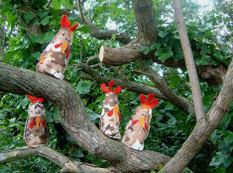 Chickens03